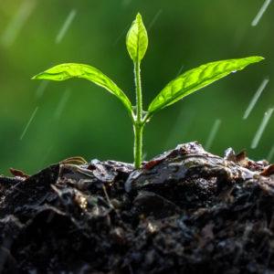 Växtnäring/gödning för proffs