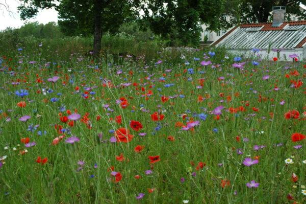 Blomsteråker 111