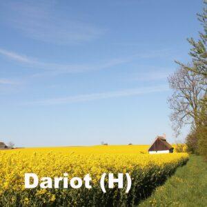 Dariot