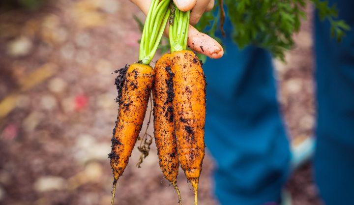 ekologisk-odling-header