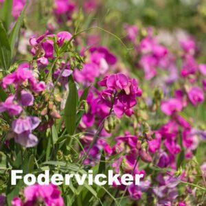 Fodervicker