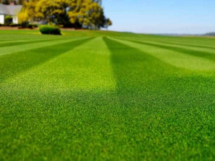 gräsmatta-bästitest