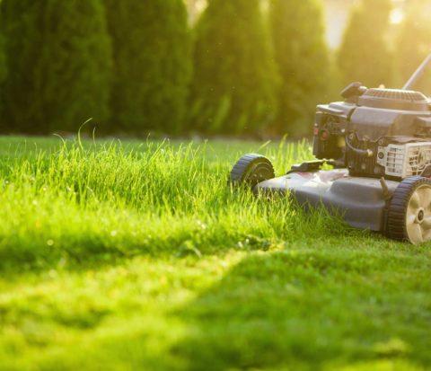 Gräsmatta med gräsklippare