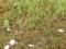 Ogräs och skador? Reparera din gräsmatta!