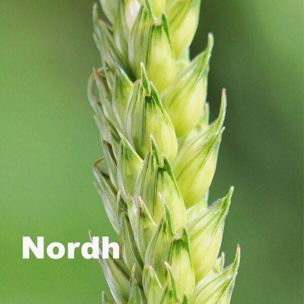 Nordh