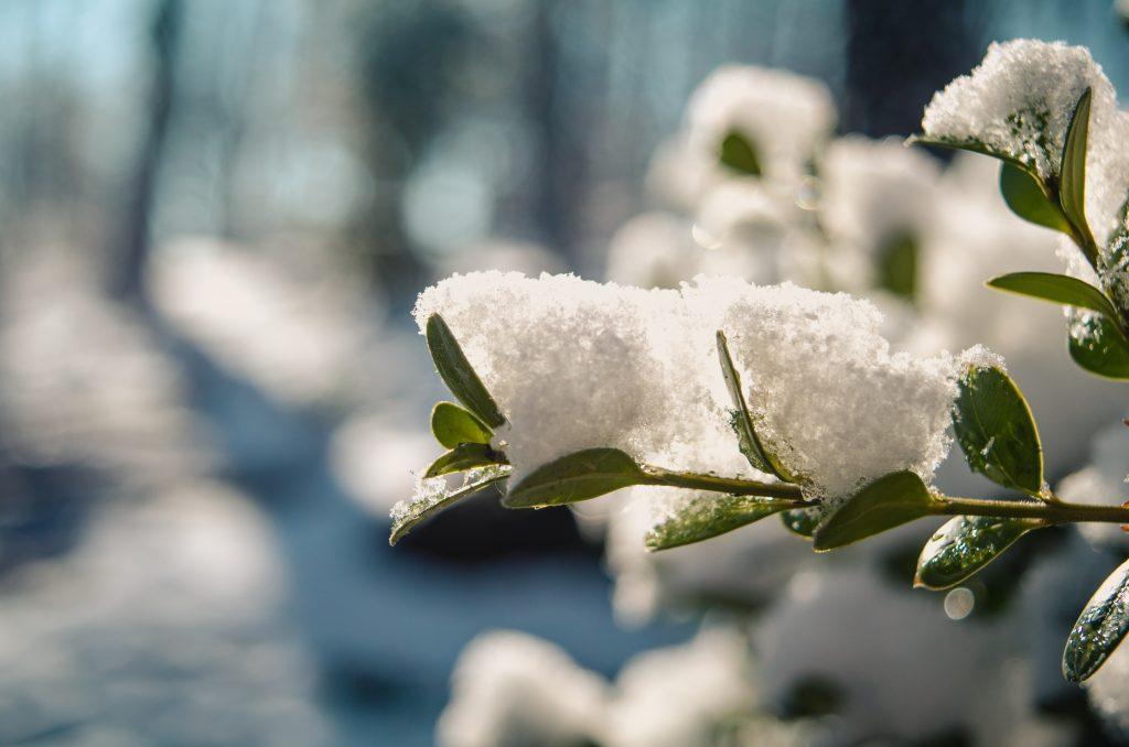 året i trädgården vinter